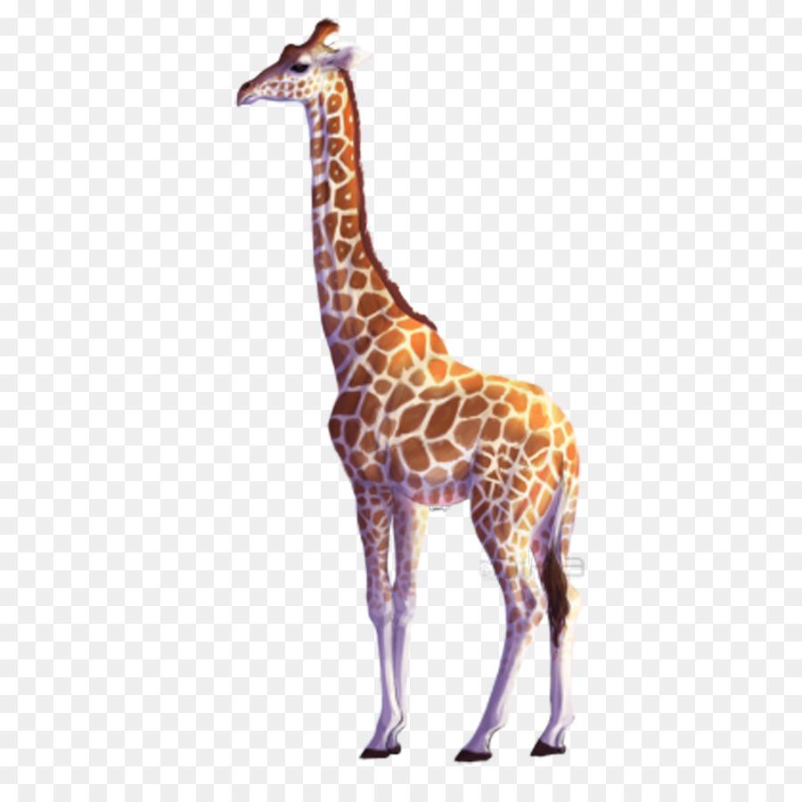 900x900 Northern Giraffe All About Giraffes Drawing Clip Art