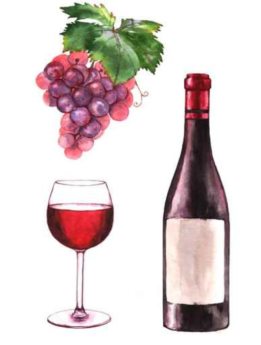 529x700 Hand Drawn Watercolor Illustration Of The Wine Bottle, Grape