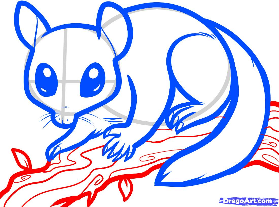 1100x817 How To Draw A Sugar Glider, Sugar Glider Step 6 Sugar Glider