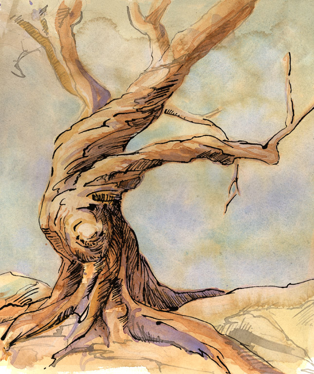 645x768 Gnarled Tree By Method2madness