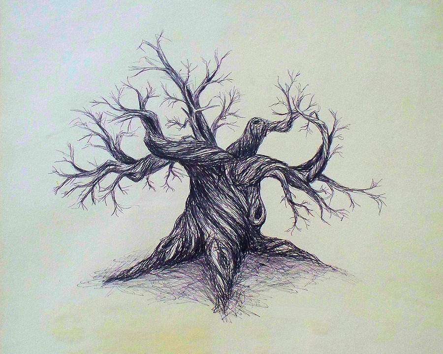 900x719 Tree Drawing By Troy Caperton
