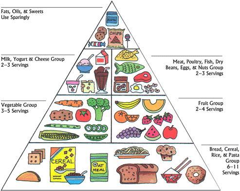 493x392 Webquest The Food Pyramid