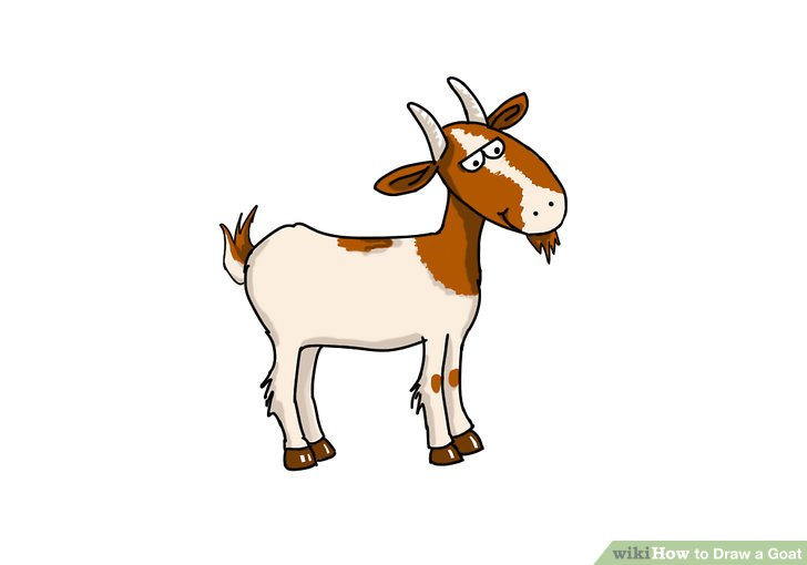 728x510 How To Draw A Goat (With Pictures)