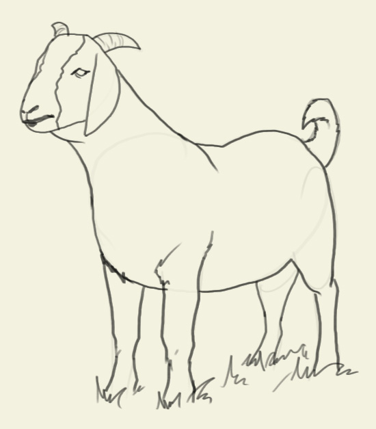 550x627 How To Draw Goat