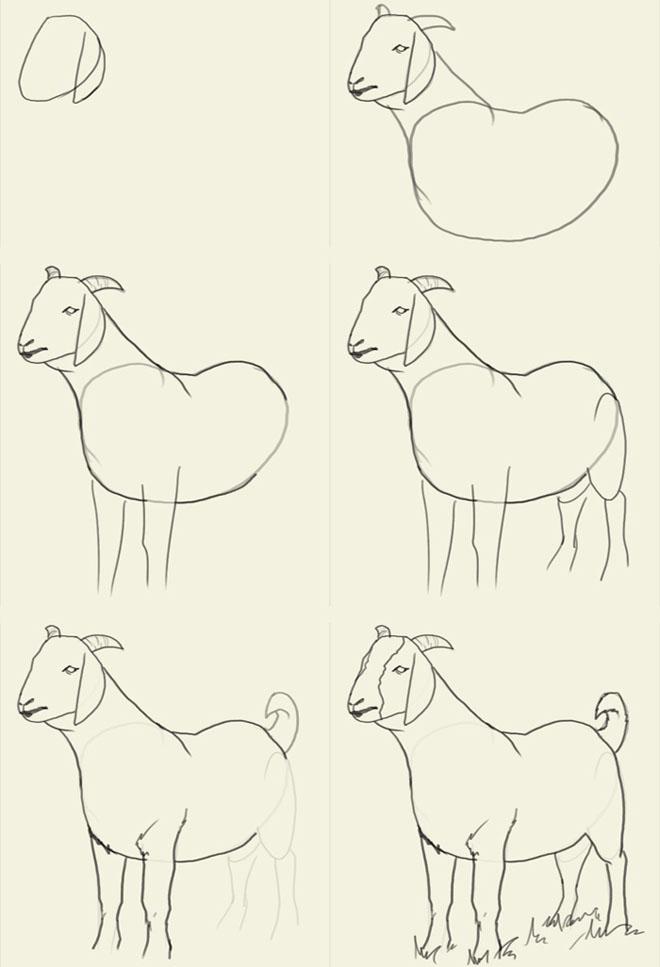 660x967 How To Draw Animals Goat Art Draw Animals, Animal