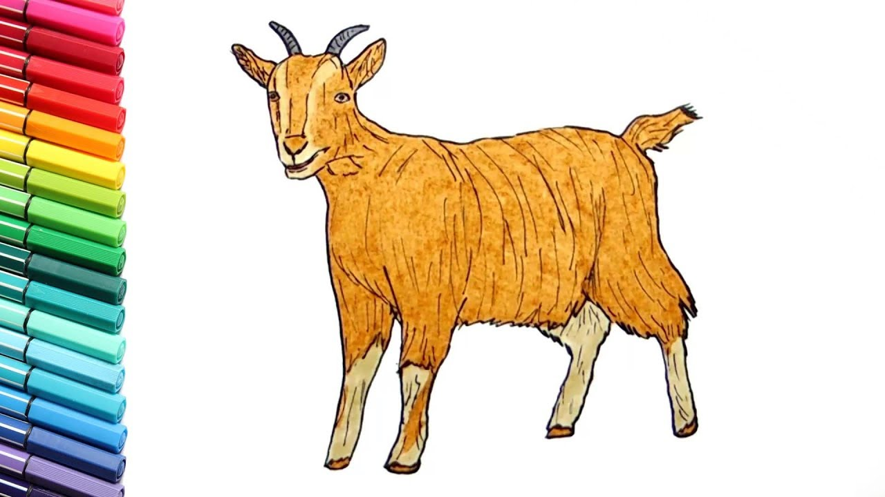 1280x720 Drawing And Coloring A Goat