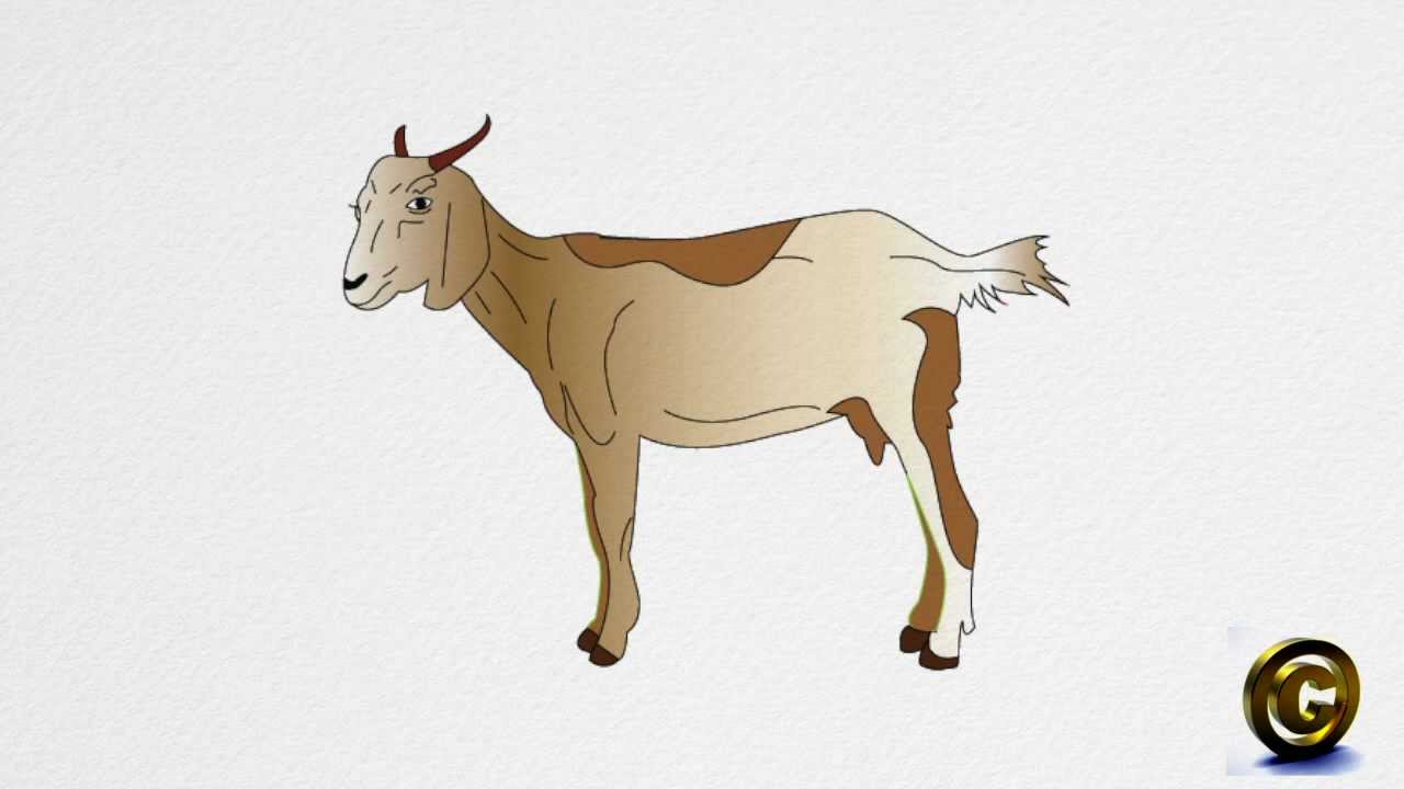 1280x720 How To Draw A Goat Step By Step