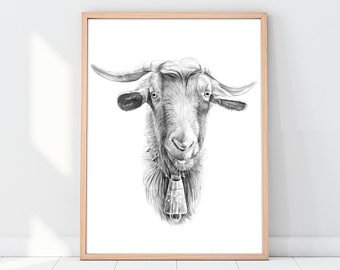 340x270 Goat Drawing Etsy