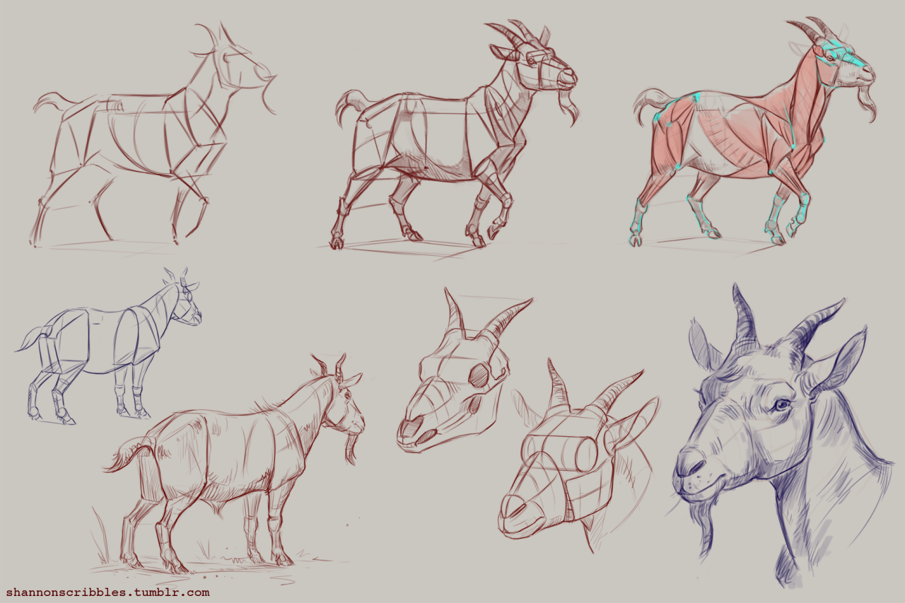 1280x853 How To Draw Goats! Specifically Pygmy Goats. ]