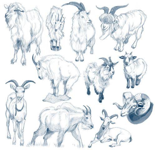 500x481 Fuck Ton Of Anatomy References Reborn A Grand Fuck Ton Of Goat