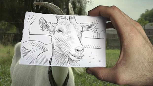 620x350 Goat Face Drawing Funny Goat Face Drawing 620x350 Goats