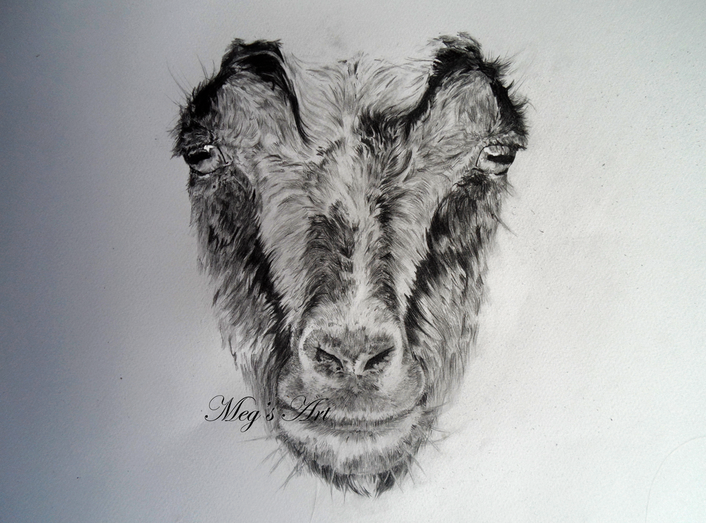Line Drawing Of Sheep Face : Shaun the sheep drawing at getdrawings free for personal use