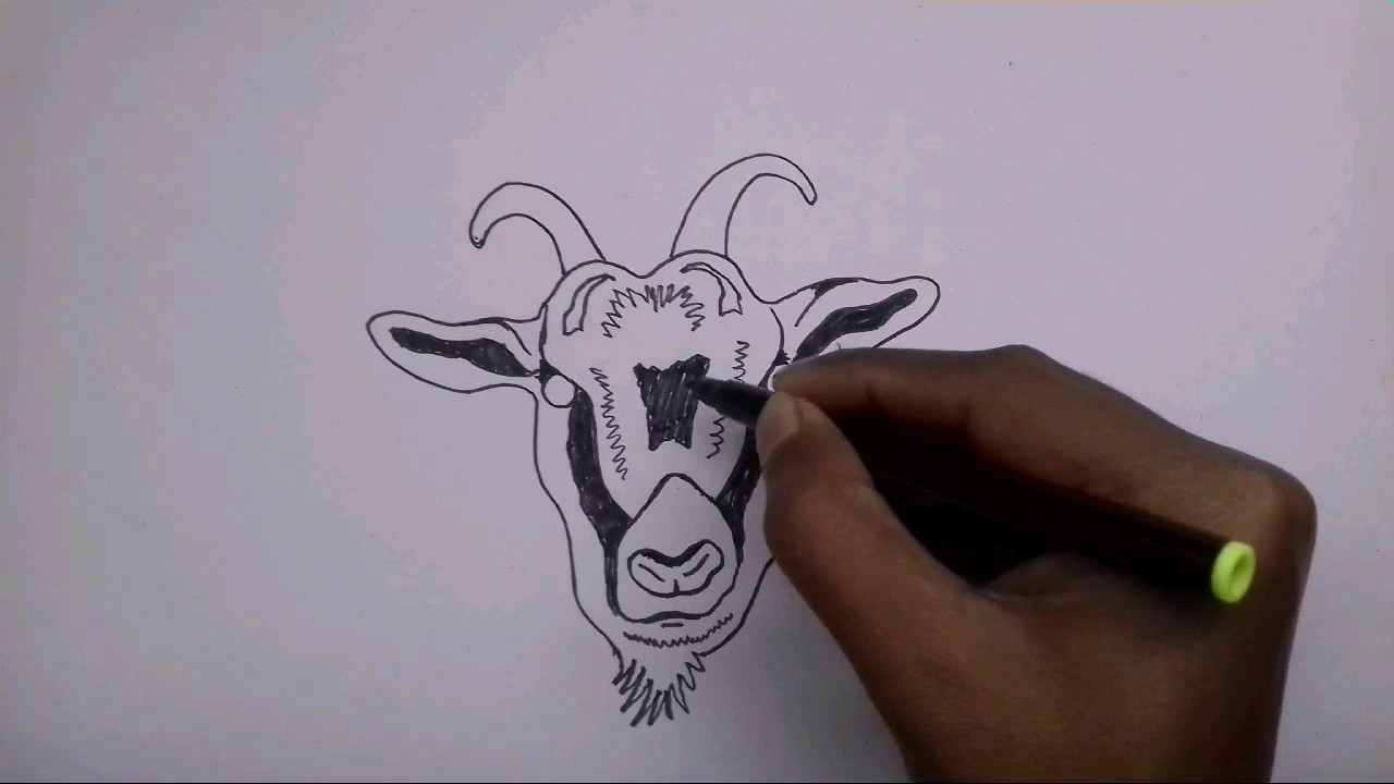 1280x720 How To Draw A Goat Face (Tribal)