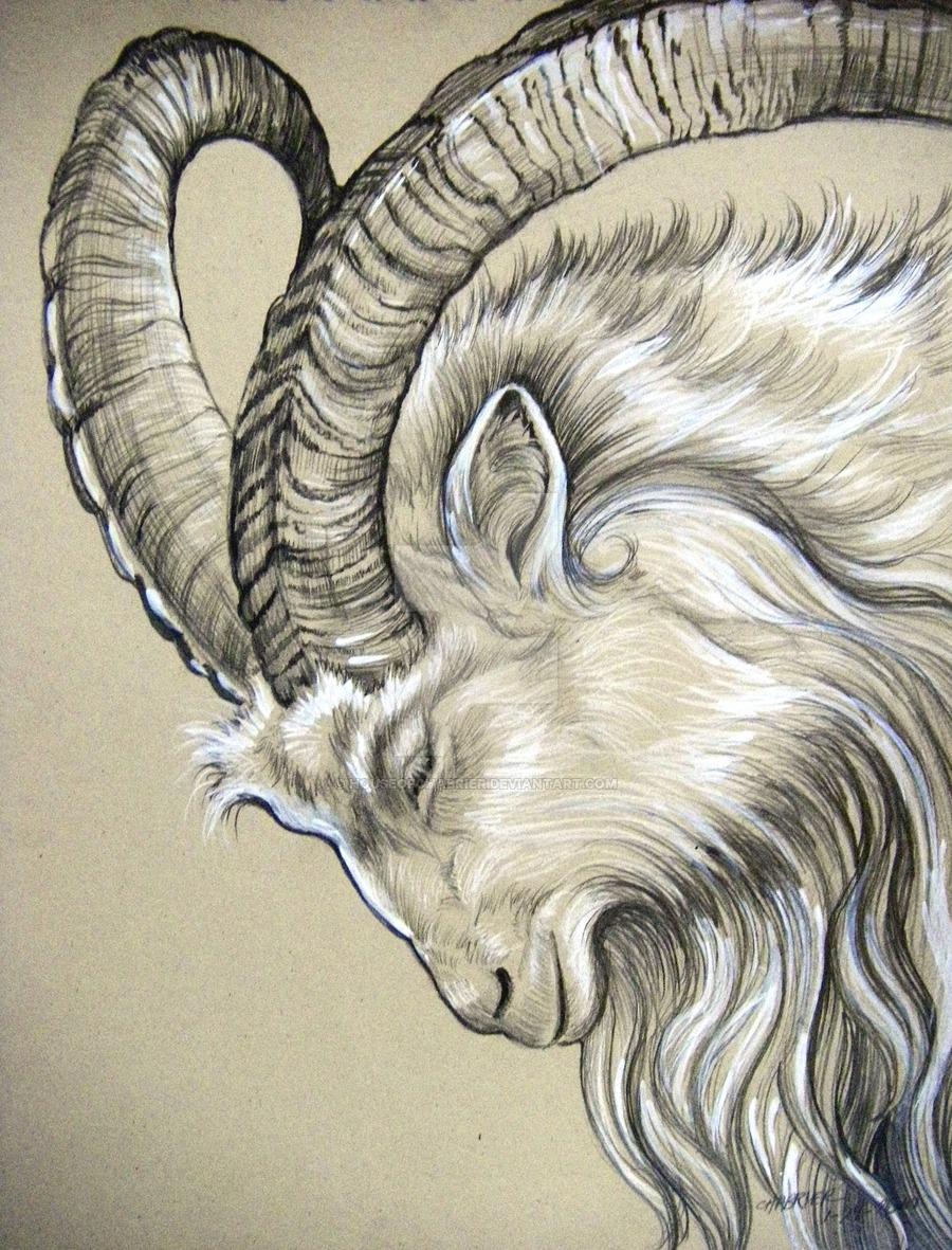 900x1181 Olikristinns Icelandic Goat By Houseofchabrier