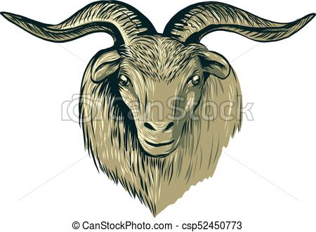 450x330 Cashmere Goat Head Drawing. Drawing Sketch Style Vectors