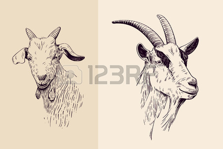 450x300 Goat Head Stock Photos. Royalty Free Business Images