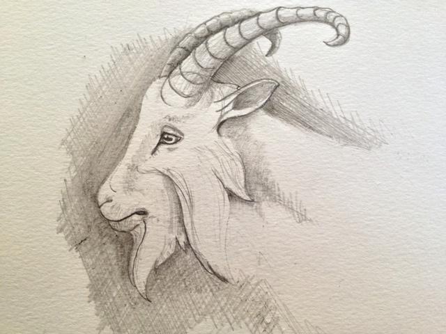 640x480 Hi. My Name Is And I Am A Drawaholic. Goat Head