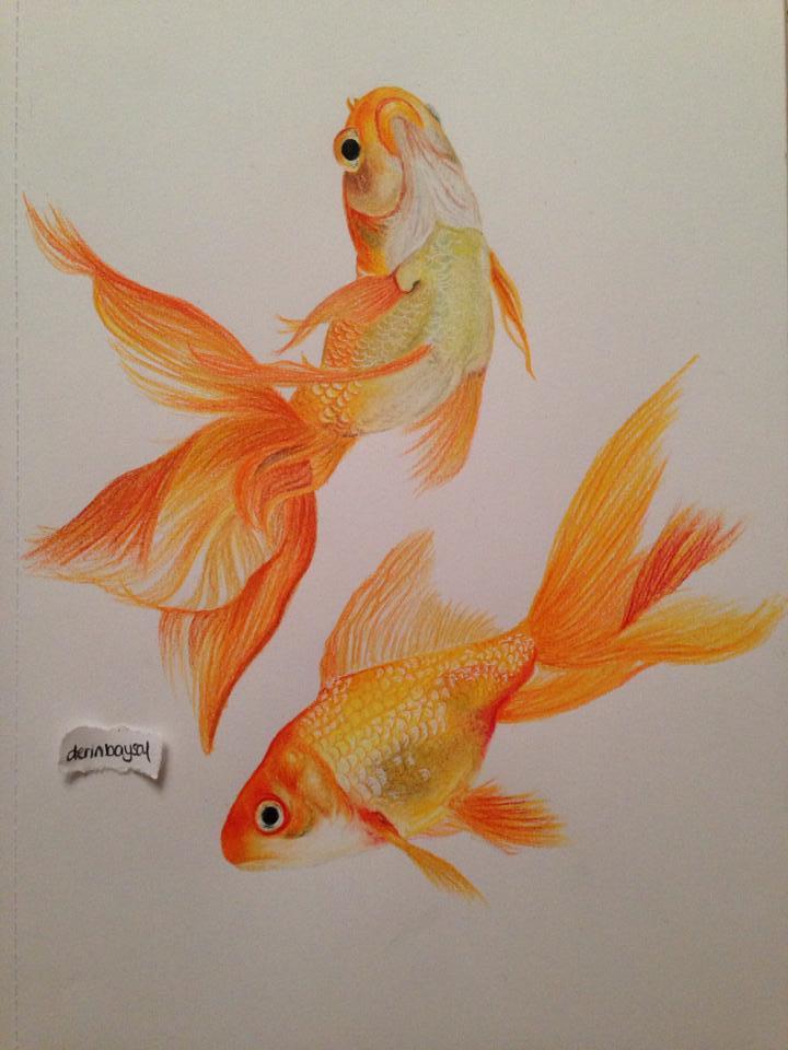 720x960 Goldfish, Prismacolor Premier Colored Pencils.