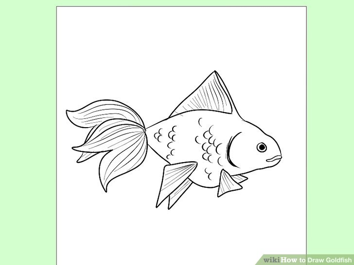 728x546 How To Draw Goldfish 9 Steps (With Pictures)