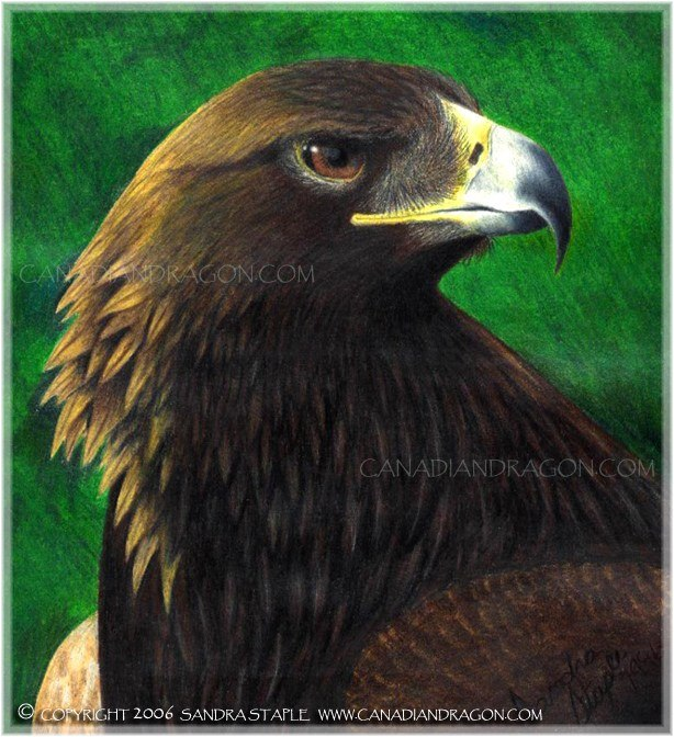 614x672 Canadian Dragon Fantasy Art Original Eagle Color Pencil Drawing