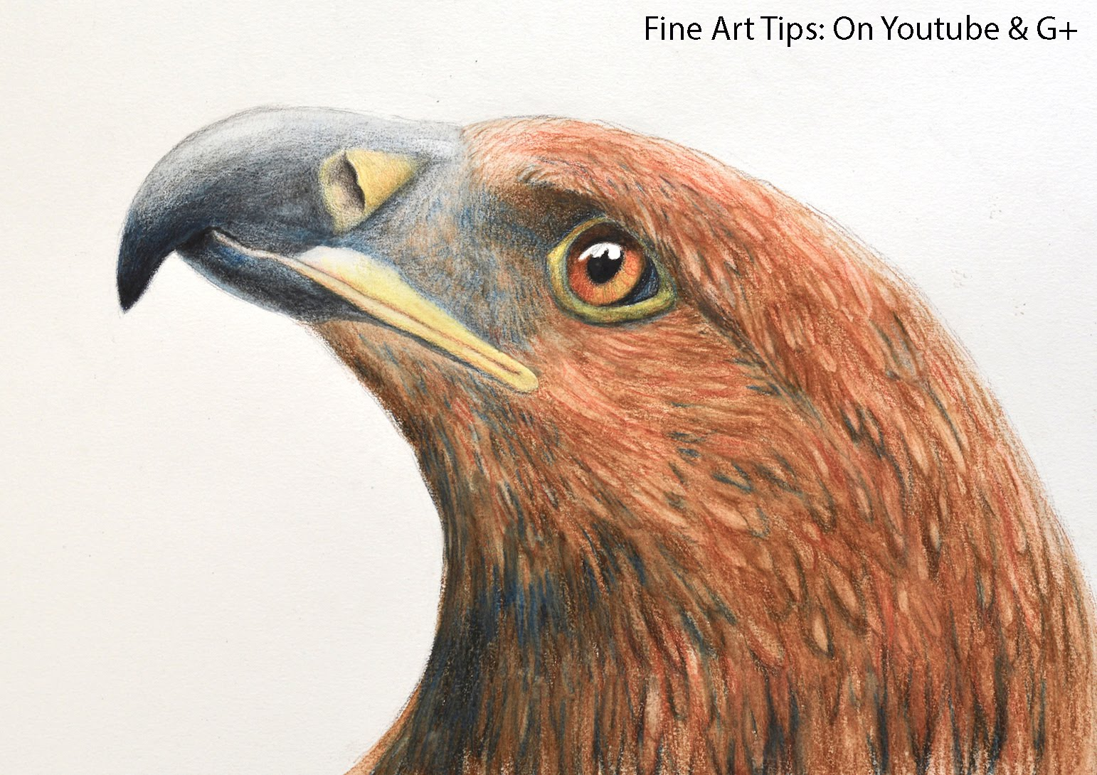 1542x1090 Drawing A Golden Eagle's Head With Watercolor Pencils