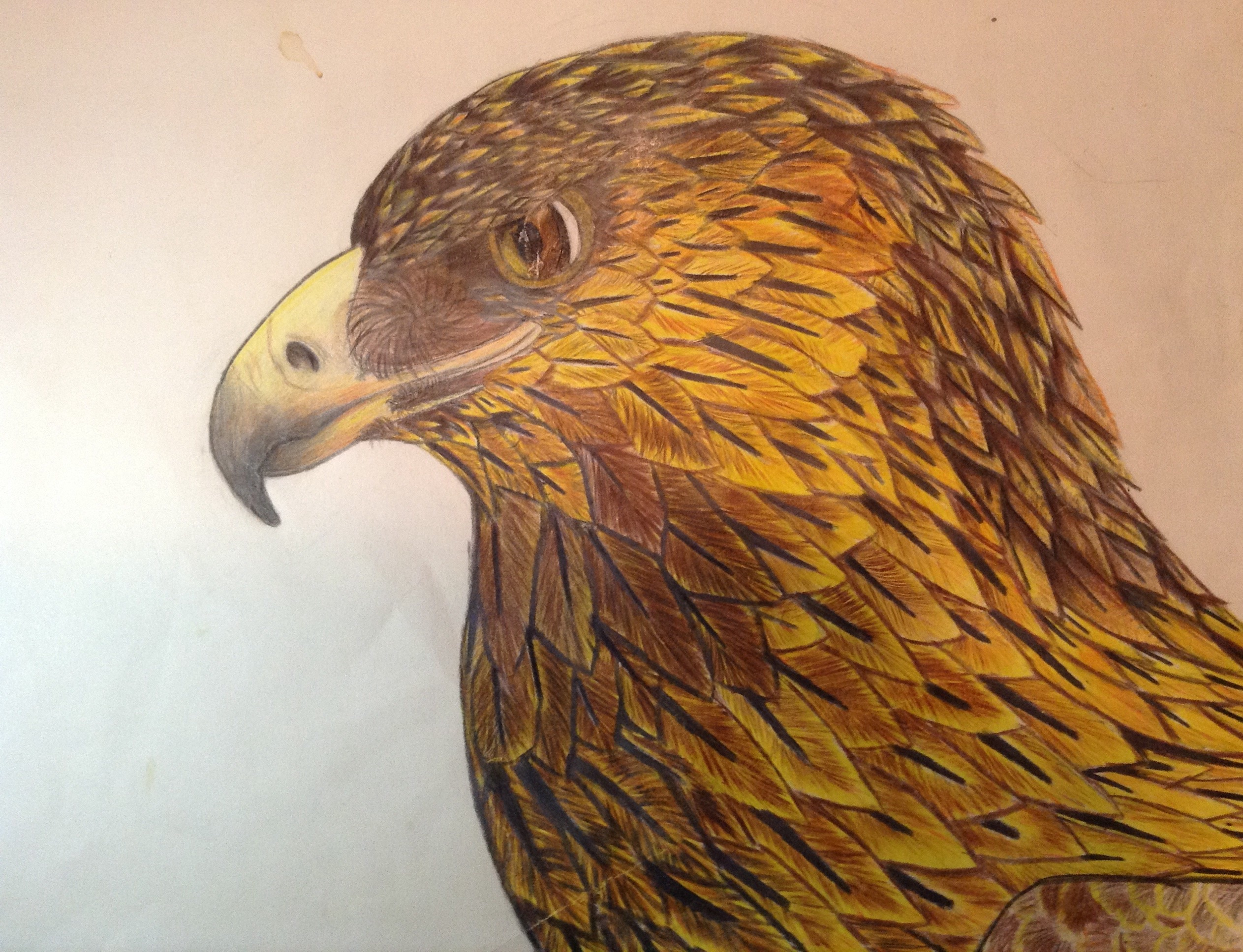 2526x1936 Golden Eagle Colour Sketch By Icearstorm
