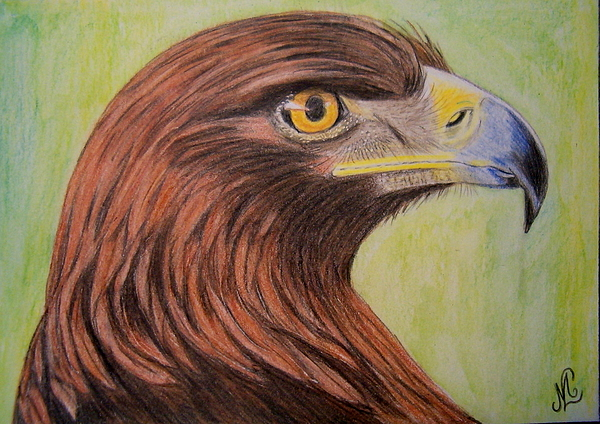 600x424 Golden Eagle Drawing By Marita Lipke