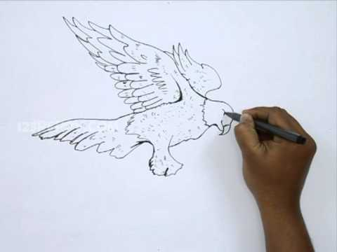 480x360 How To Draw A Golden Eagle