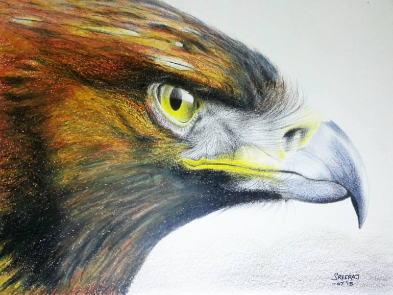 770x578 Saatchi Art The Golden Eagle Drawing By Sreeraj Krishnan K