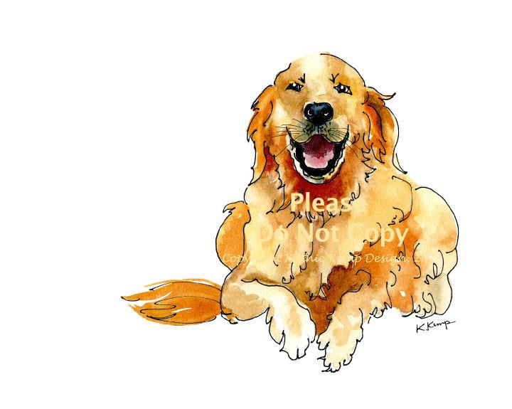 720x575 Golden Retriever Drawing Pen Amp Ink Watercolor Gift Idea Fathers