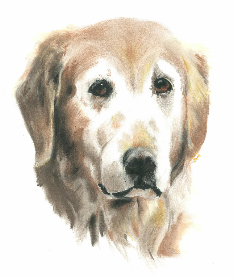 golden retriever drawing at getdrawings com free for personal use