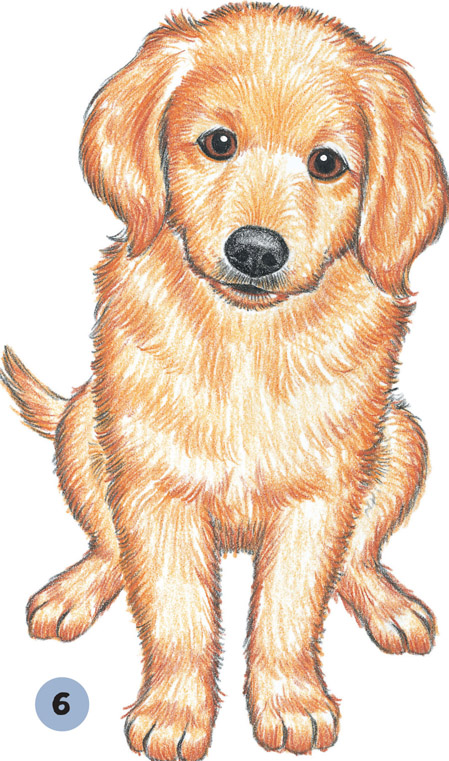 Golden Retriever Drawing at GetDrawings.com | Free for ...