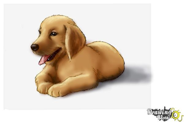 600x400 How To Draw A Golden Retriever Puppy