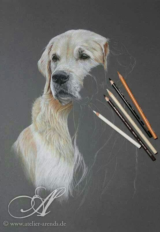 554x800 Genio! Art Coloured Pencils, Draw And Pastels