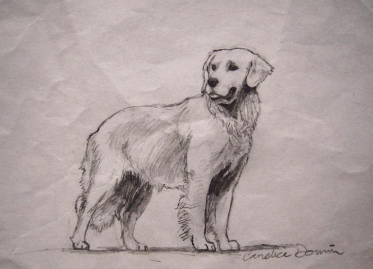 765x552 Golden Retriever Sketch By Jezarae