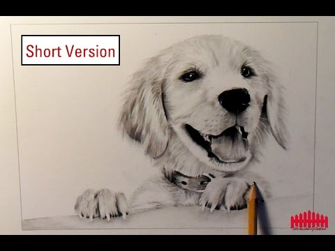 480x360 Pencil Drawing Dog