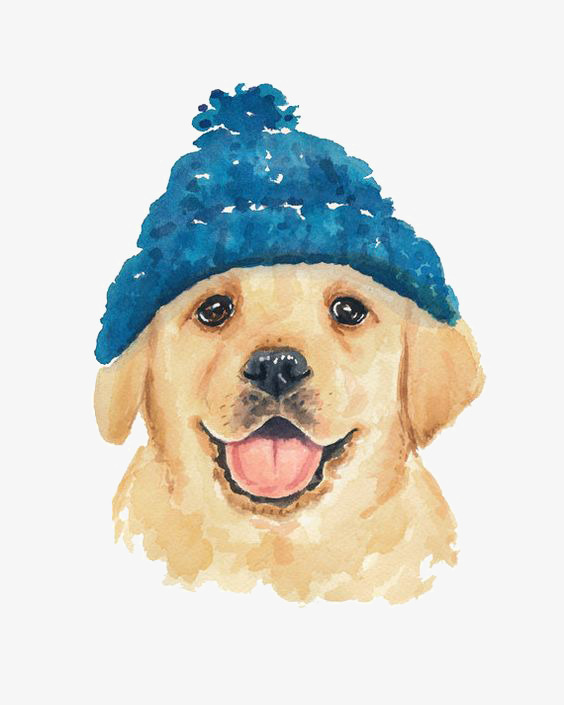 564x705 Cartoon Golden Retriever Dog, Pet Dog, Hand Painted Puppy, Drawing