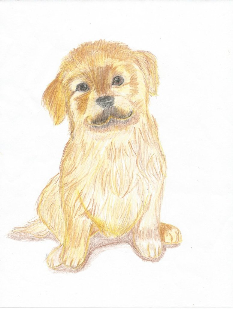 776x1029 Golden Retriever Puppy Colour By Artemishunt123