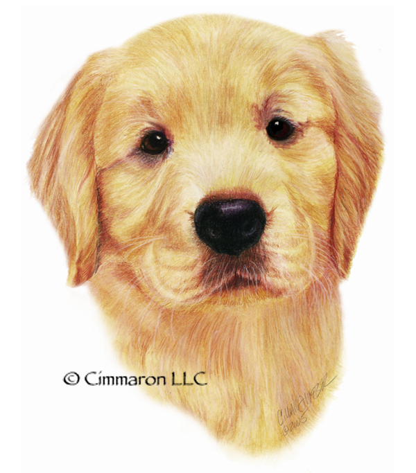 600x683 Golden Retriever Puppy Head