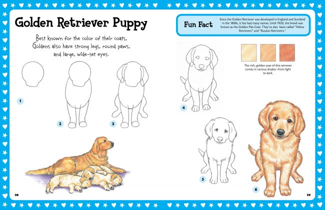 650x420 Step By Step Drawing Puppies Go Back Gt Pix For Gt How To Draw