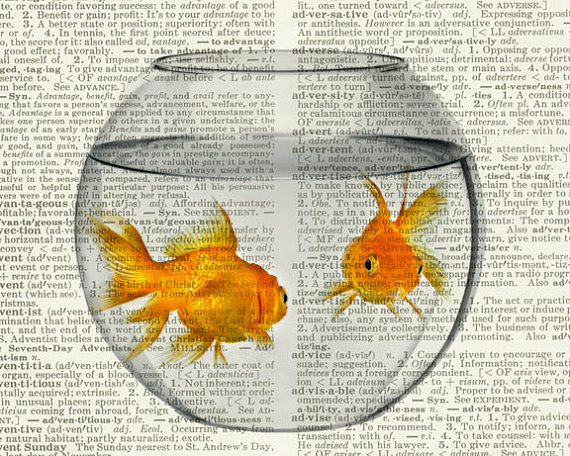 570x456 Goldfish Bowl Dictionary Print Goldfish Bowl, Goldfish