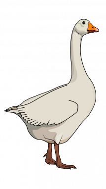 215x382 How To Draw A Goose, Animals, Birds, Easy Step By Step Drawing