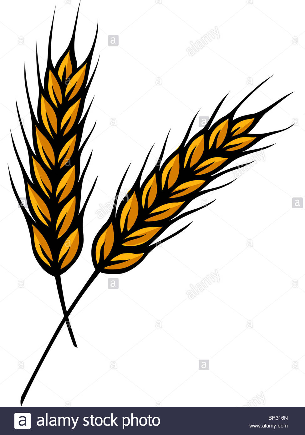 975x1390 Wheat Stalk Drawing Wheat Stalk Painting By Jelly Pictures To Pin