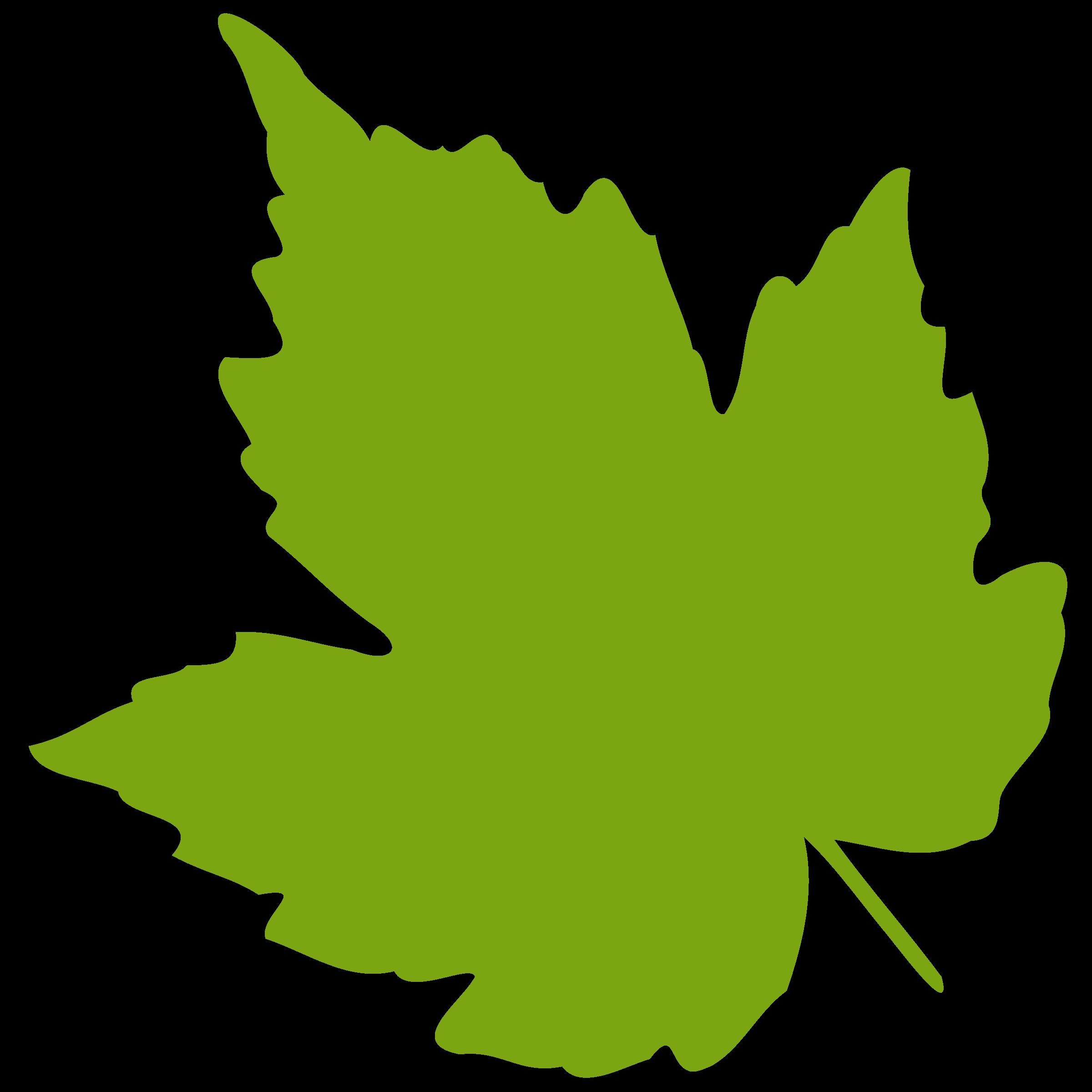 2400x2400 Grape Leaf Clipart