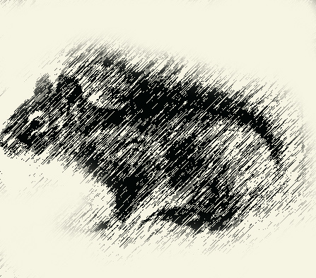 447x393 Graphic Pen Drawing Of Squirrel Dark Brown Graphic Pen