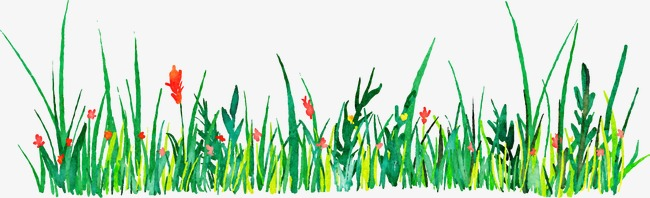 650x198 Drawing Vector Decorative Grass, Watercolor, Vector, Decoration