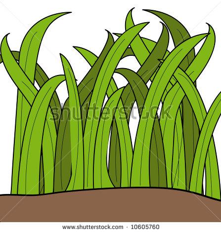 447x470 Cartoon Grass Cartoon Drawing Of Blades Of Green Grass
