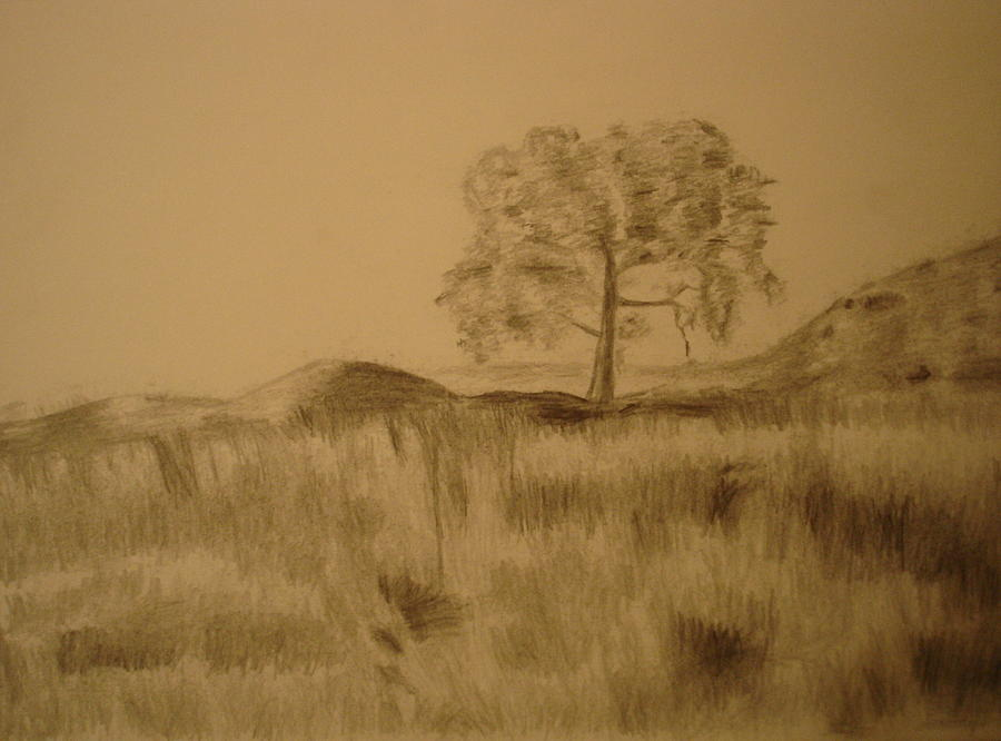 900x666 Grass Field And Tree Drawing By Shibin Varghese