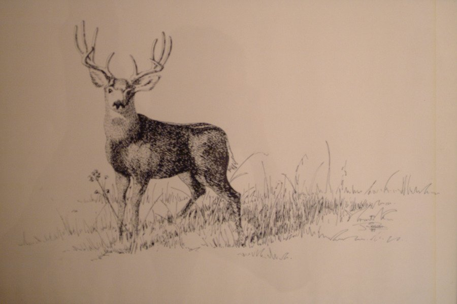 900x600 Acquired A Pencil Drawing Of A Deer In Grass By The Artist Ridgway