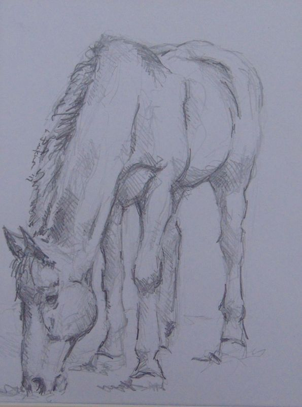 595x800 At Grass By Lee Jenkinson. Pencil Drawing On Paper, Subject